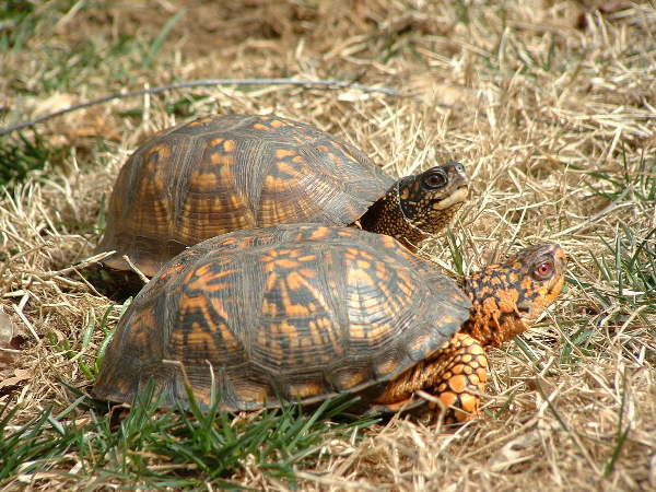 articles guide to choosing your first land based turtle