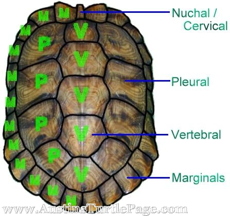an analysis of the topic of the turtle graphics In mupad notebook only, turtle graphics define a line drawing by a sequence of commands to an abstract robot.