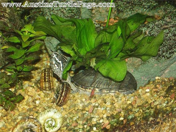 Article: Planted Turtle Tanks
