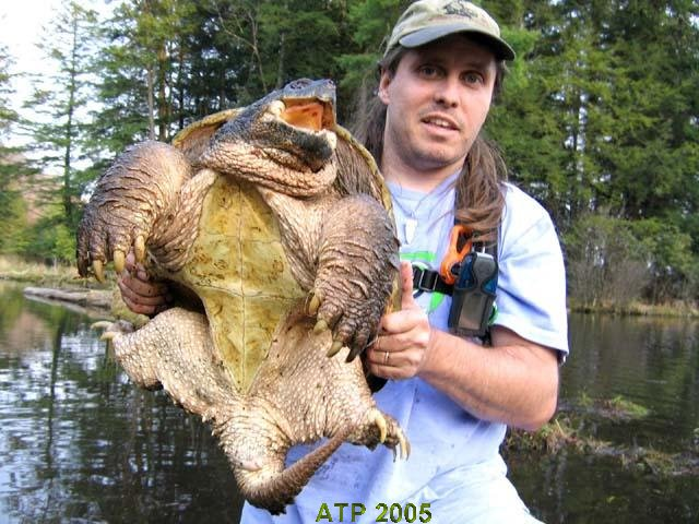 http://www.austinsturtlepage.com/world_of_turtles/Common_Snapping_Turtles_-_Chelydra_serpentina/images/wpg.jpg