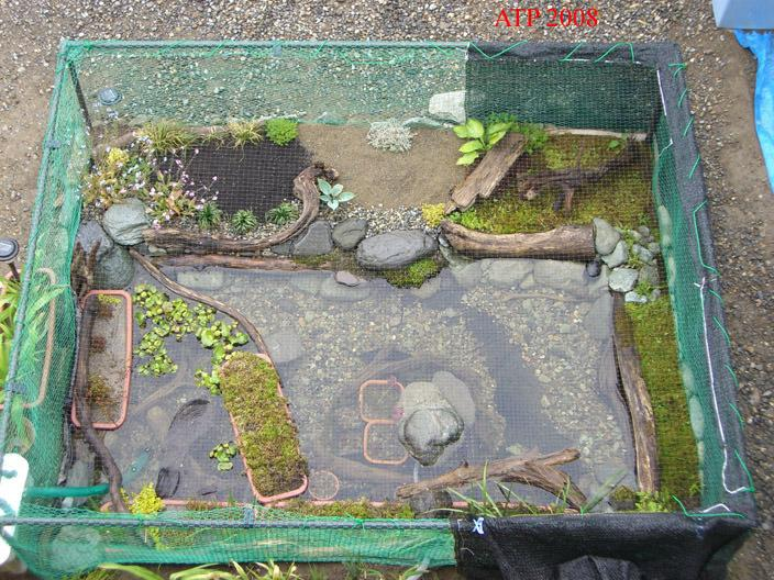 Related keywords suggestions for homemade turtle pond Diy indoor turtle pond