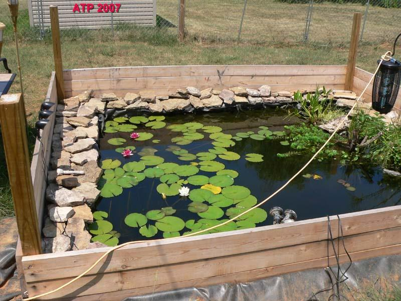ve kept aquariums for years, & use live plants to aid filtration. I ...